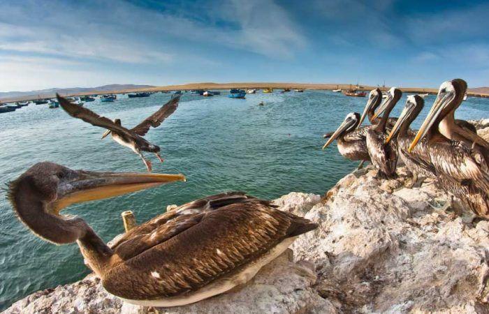 Tour Islas Ballestas Sobre Vuelo Líneas de Nasca desde Pisco
