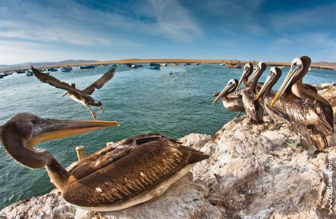 Tour Islas Ballestas Reserva Nacional de Paracas desde Ica